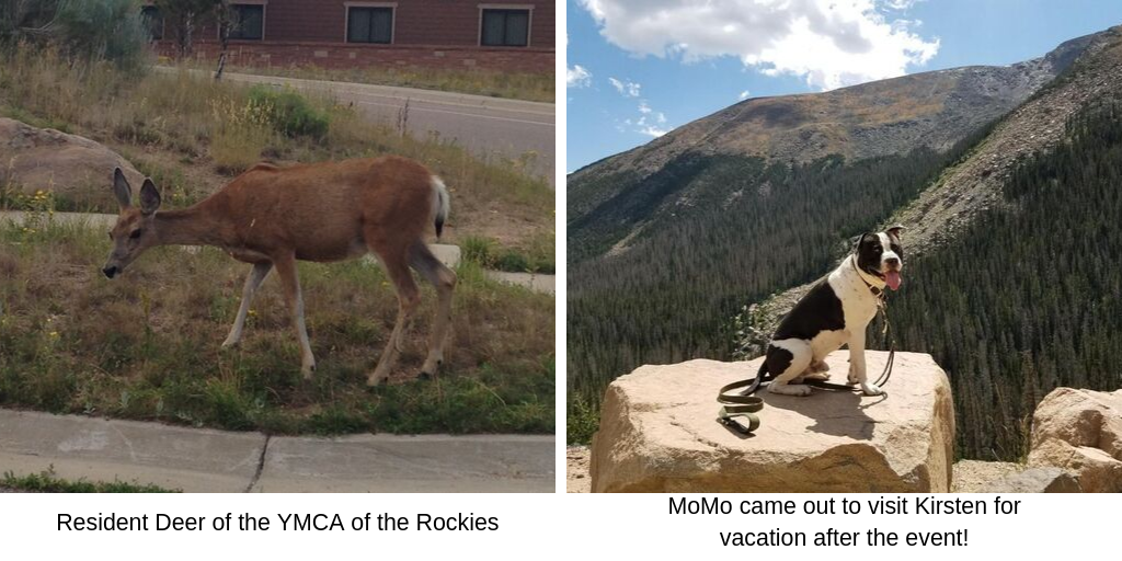 Resident Deer of the YMCA of the Rockies